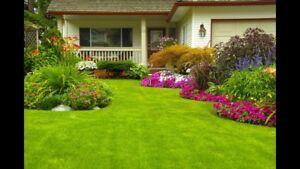 Lawn maintenance !!!