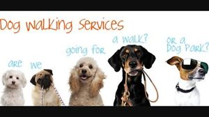 Dog Walking  $15 Conder Tuggeranong Preview