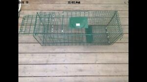 Animal  trap for rent