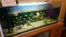 4ft fish tank with 6 tropics fish Creswick Hepburn Area Preview