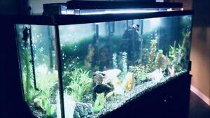 Grande aquarium 120 gallons tout équipé.