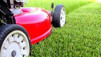 Professional Lawn Maintenance and Yard Services