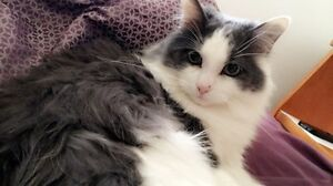 Looking for a cat sitter for month of may!