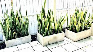 Large through plant pots Forest Lake Brisbane South West Preview