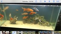 90 gal aquarium