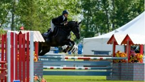 English Riding Lessons - Beginner to Advanced