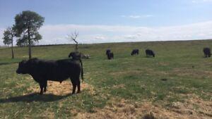 Prairie Prime Wagyu