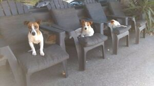 3 dogs, Free to good home Eltham Nillumbik Area Preview