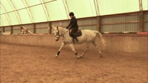 Warmblood mare for part board