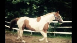Colourful mare for sale