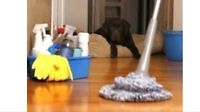 RESIDENTIAL  CLEANERS, WABAMUN to EDMONTON