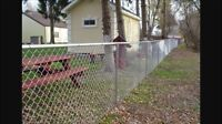Looking for a new fence?