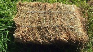 Lucerne hay Colac Colac-Otway Area Preview
