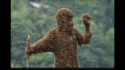Bee removal for free!nice and quick!