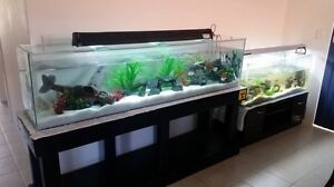 6footer aquarium with stand and acc Safety Bay Rockingham Area Preview