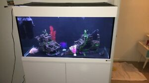 3 foot fish tank Harrisville Ipswich South Preview
