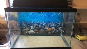Complete aquarium/fish tank set up (lots of extras)