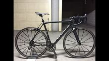 Focus izalco team road bicycle Mascot Rockdale Area Preview