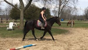 AQHA more woah than go Mare for sale