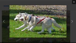 AKKO Sports authentic Dog sled Harness