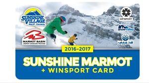 Sunshine Marmot card