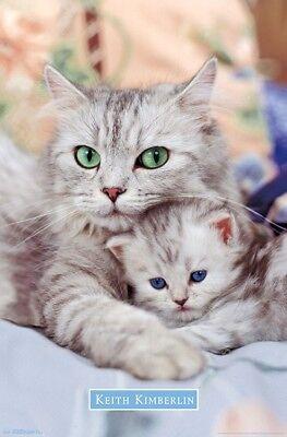 Kitten   Momma   Cute Cats Poster   22X34   16549