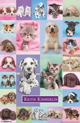 PUPPIES & KITTENS - COLLAGE POSTER - 22x34 - CUTE DOGS CATS 16352 - Puppy Posters