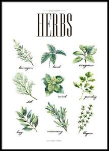 Square One Herbs delivery for your Condo space - $2/herb