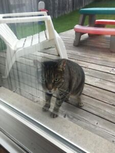 LOST CAT BARRIE !!
