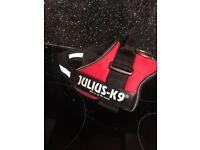 Julius-K9 dog harness