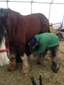 Farrier services that wil go that extra step to please,,,