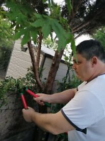 Gardening, Planting and Landscaping