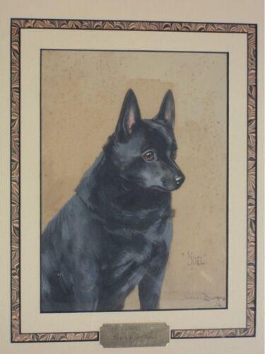 Magnificent Schipperke dog Painting, Reuben Ward Binks