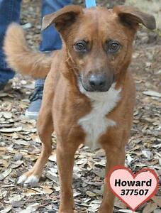 Howard is a 2 yr. old Terrier mix