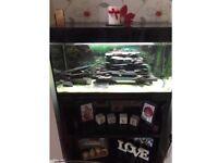 Italian Askoll fish tank