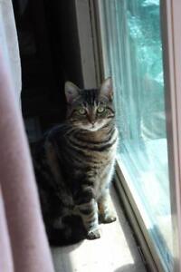 "Adult Female Cat - Bengal: ""GG"""