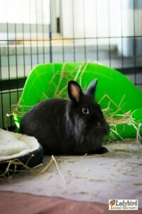 "Young Male Rabbit - Dwarf: ""Willow & Waffles"""