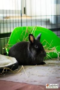 """Young Male Rabbit - Dwarf: """"Willow & Waffles"""""""
