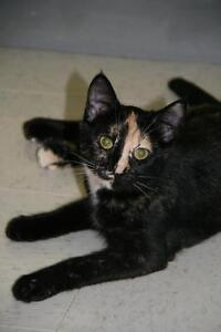 "Young Female Cat - Tortoiseshell: ""Tatiana"""