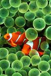 aquatasnorkeling