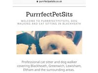 REGISTERED Cat Sitter and Dog Walker, Veterinary Nurse, FULL DBS CHECK. References Available