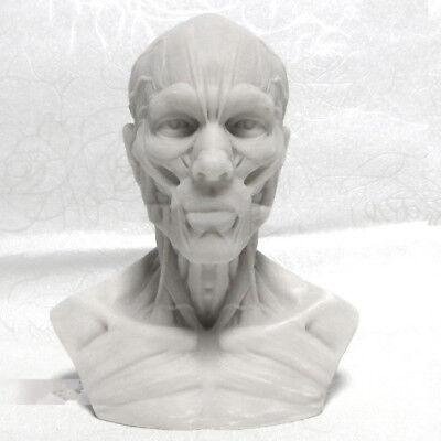 (10 CM Human Skull skeleton Craft Anatomy Skull Head Muscle Bone Model White)