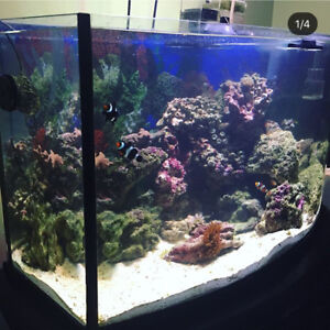 Saltwater reef tank for sale