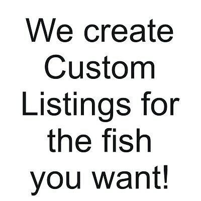 A special listing for another African Cichlid lover,  dlewis2828
