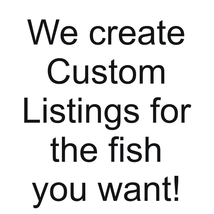 A special listing for another African Cichlid lover,  rockit