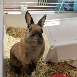 Spayed and litter trained bunny looking for forever home