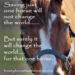 Howey Horse Haven Rescue