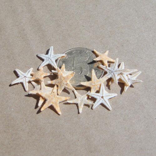 50Pc Mini Starfish Sea Star Shell Beach Wedding Craft DIY Making Decor Miniatur