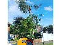 Treesens tree services