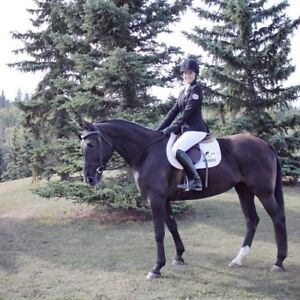 Looking for horse board (close to Fort McMurray)